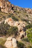 Végétation en falaises de la côte d'Alicante images libres de droits
