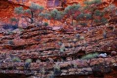 Végétation en terrasse des Rois australiens Canyon Image stock