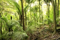 Végétation forestière tropicale photos stock