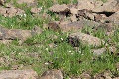 Végétation haute dans les montagnes d'Alma-ATA Photos libres de droits