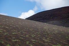 Végétation/lave Photo stock