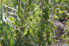 Végétation lumineuse et verte Photo stock