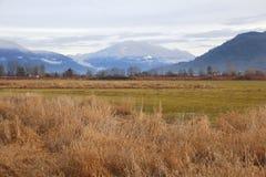 Végétation mélangée d'hiver Photo libre de droits