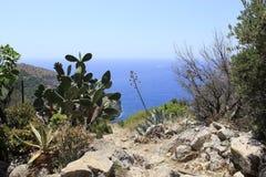 Végétation, près de la baie d'Ieranto, Massa Lubrense, Italie image libre de droits