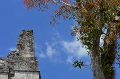 Végétation riche et le dessus du temple antique de Maya dans Tikal Photos stock