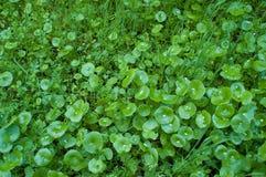 Végétation sauvage Image libre de droits
