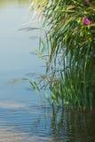 Végétation sur l'eau Photographie stock libre de droits