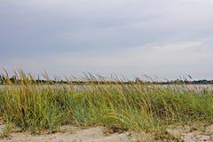 Végétation sur la plage et un beau ciel nuageux image libre de droits