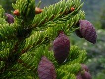 Végétation très gentille du haut de la montagne noire Image libre de droits
