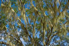 Végétation tropicale images stock