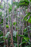 Végétation tropicale Photographie stock libre de droits