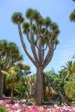 Végétation tropicale Photo libre de droits
