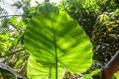 Végétation tropicale Image libre de droits