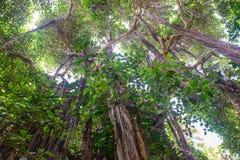 Végétation tropicale Photos libres de droits