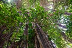 Végétation tropicale Image stock