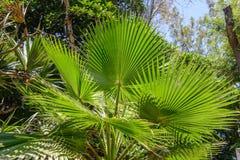 Végétation tropicale Photo stock