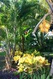 Végétation tropicale colorée Image libre de droits
