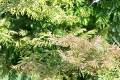Végétation verte en nature avec des arbres et des feuilles Image libre de droits