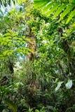 Végétation verte luxuriante dans la forêt amazonienne tropicale photos stock