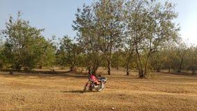 Vélo dans la jungle photographie stock