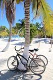 Vélo de bicyclettes sur la plage des Caraïbe de palmier de noix de coco Image libre de droits