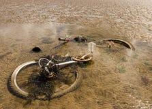 Vélo de rouillement dans l'océan Photo libre de droits