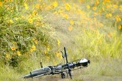 Vélo en parc Images libres de droits