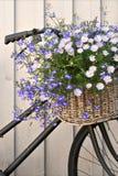 Vélo floral Photos libres de droits