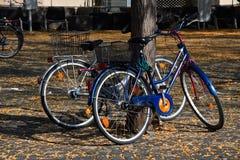 Vélos à louer Image libre de droits
