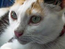 Véritables animaux de mode de vie d'amour dans le monde entier Photos libres de droits