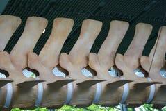 Vértebras da baleia Fotos de Stock