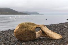 Vértebras de la ballena en la orilla del río de Chukchi fotos de archivo libres de regalías