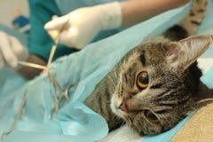 Vétérinaire Photo stock