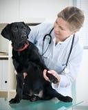 Vétérinaire photos stock