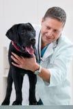 Vétérinaire images stock