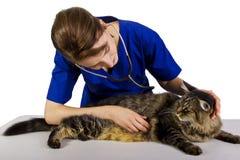 Vétérinaire Images libres de droits