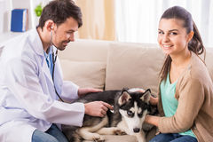 vétérinaire Photo libre de droits