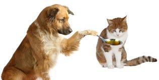 Vétérinaire adorable de crabot Images stock