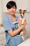 Vétérinaire attirant de chemin mélangé avec le chiot mignon Image stock