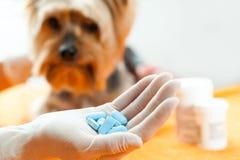 Vétérinaire avec des pilules de chien Images stock