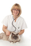 Vétérinaire avec le chat Images stock