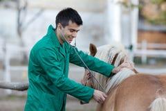 Vétérinaire avec le cheval de poney image libre de droits
