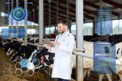 Vétérinaire avec le PC et les vaches de comprimé à l'exploitation laitière Images stock