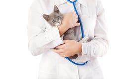 Vétérinaire avec le stéthoscope et le chaton Images stock