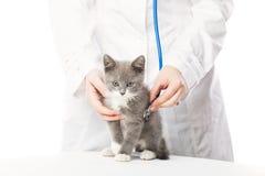 Vétérinaire avec le stéthoscope et le chaton Photo stock