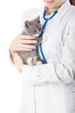 Vétérinaire avec le stéthoscope et le chaton Images libres de droits