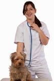 Vétérinaire dans la formation Photo libre de droits