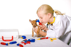 Vétérinaire de fille contrôlant les oreilles de crabot de chiot Photo libre de droits