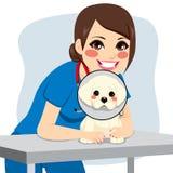Vétérinaire Dog Collar Photographie stock libre de droits