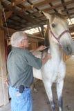 Vétérinaire donnant à un cheval un projectile Photographie stock libre de droits